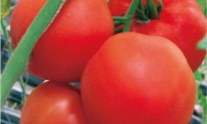 西红柿栽培管理技术