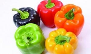 蔬菜嫁接育苗技术是什么?